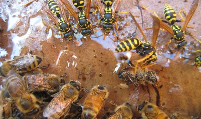 wasps and bees course
